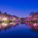 東京賞櫻10大景點